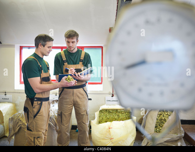 Workers select hops in brewery - Stock Image