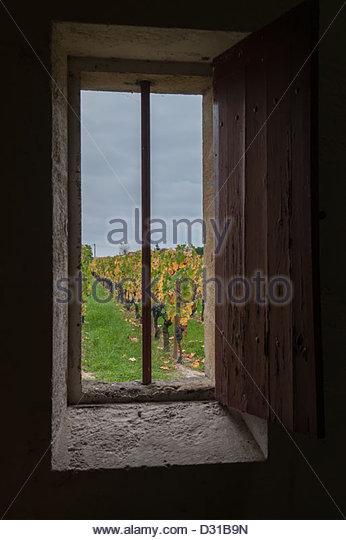 Saint Emilion,Harvest in a field of grand crû classé of Bordeaux,France.©William Stevens - Stock Image