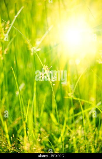 Green grass - shallow depth of field - Stock Image