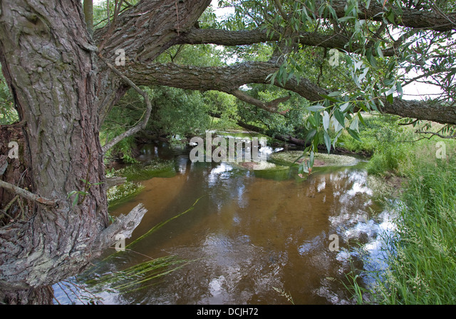 Brook, river, rivulet, stream, Naturnaher Flachlandbach, Bach, Fluß, Fluss - Stock-Bilder