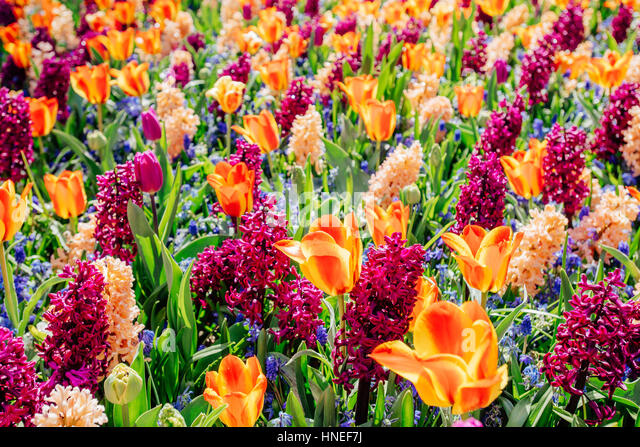 field of wild flowers. - Stock Image