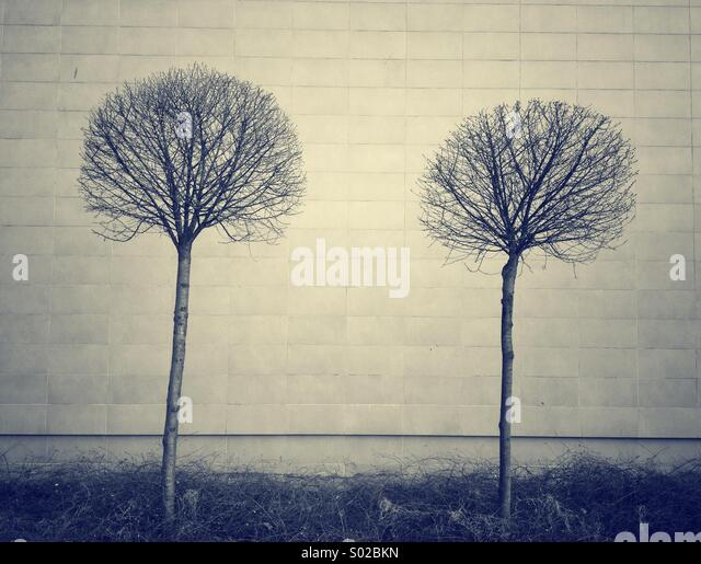 Bare trees against wall. - Stock Image