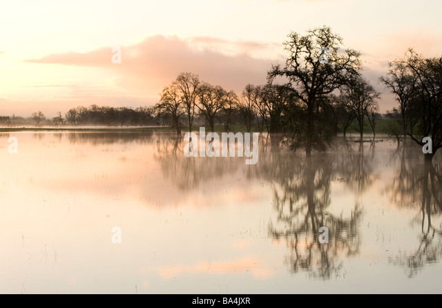 Trees and reflections in water - Stock-Bilder
