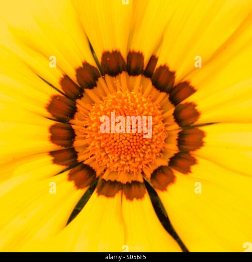Summer flower close up - Stock Image