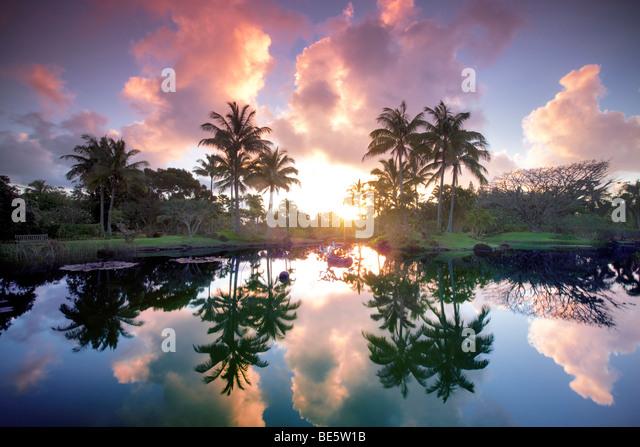 Pond with reflecting palm trees and garden at Na Aina Kai Botanical Gardens. Kauai, Hawaii - Stock Image