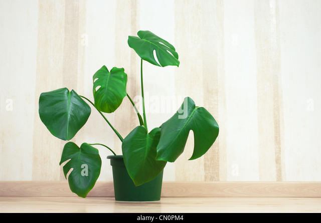 Green plant next to a wall. - Stock Image