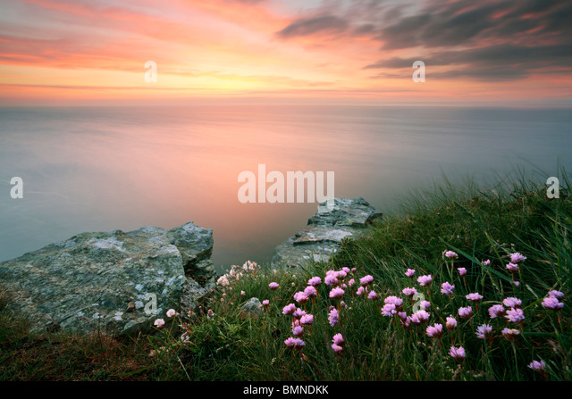 Summer thrift and a twilight sky from the edge of Valley of the Rocks near Lynton in Exmoor National Park, Devon, - Stock Image