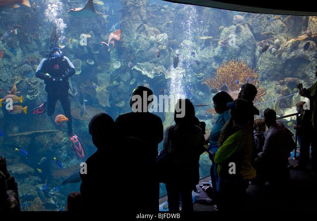 Los Angeles Aquarium | N7 Alamy Com Zooms 7626f16d449e45578497081ccbd871a