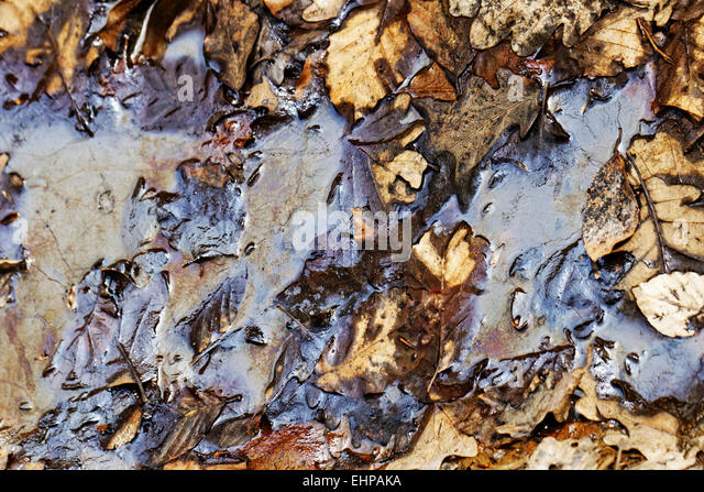oil pollution on forest land - Stock Image