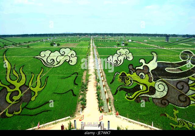 Shenyan, Shenyan, China. 22nd June, 2017. .Nineteen giant pictures of rice paddy art can be seen at a village in - Stock-Bilder