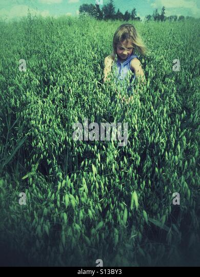 A girl makes her way through a deep field of oats. - Stock Image