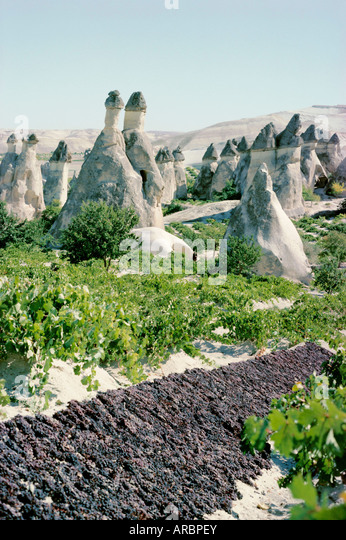 Grapes drying, vineyard and cone houses, Cappadocia, Anatolia, Turkey, Asia Minor, Asia - Stock Image