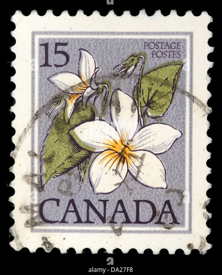 CANADA - CIRCA 1977: A stamp printed in Canada shows Flower: Canada violet, from the series 'Flowers' , - Stock Image