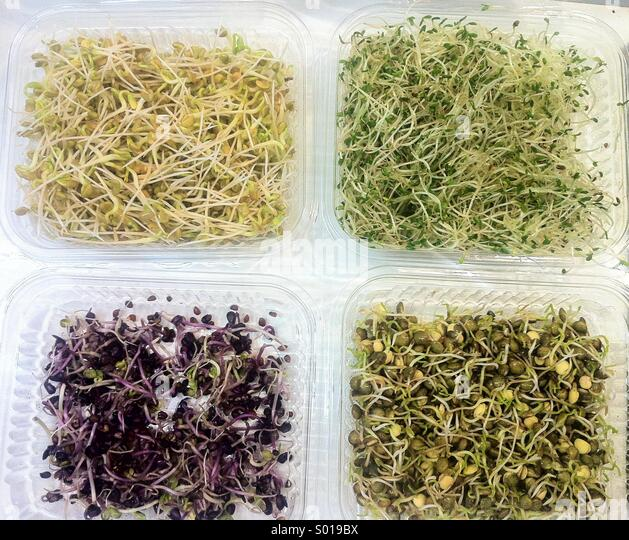 Four different edible raw sprouts - Stock Image