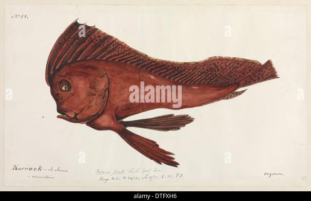 Fish illustration - Stock Image