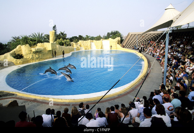 Spain, Canary Islands, Tenerife, Loro parque in Puerto of Cruz, aquatic show with dolphins - Stock Image
