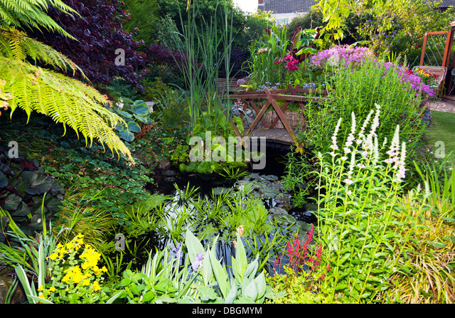 Ornamental pond stock photos ornamental pond stock for Typical landscaping plants