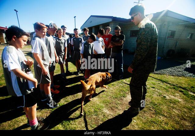 Dog Training Temecula Valley