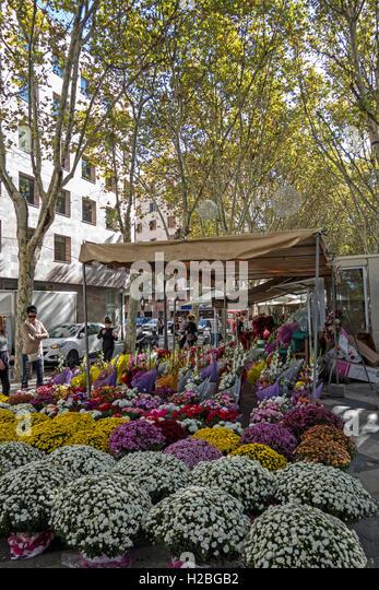 Flower stalls. La Rambla. Palma de Mallorca. Spain - Stock Image