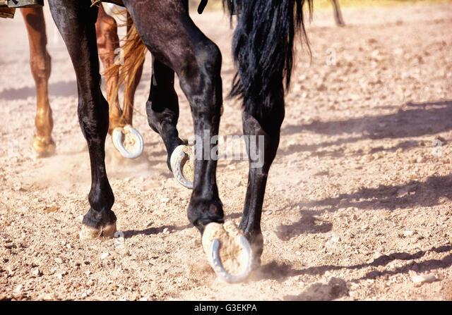 Details of horses walking. - Stock Image