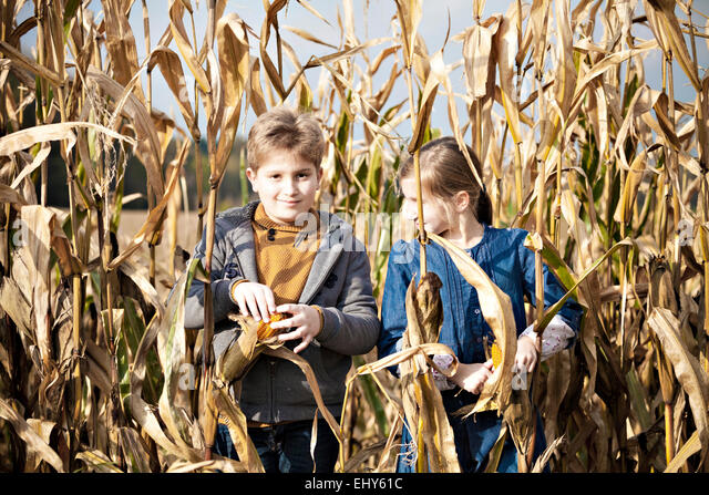 Children standing in maize field - Stock Image