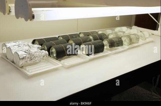 Light/dark bottles under lights in an aquatic primary productivity study. - Stock Image
