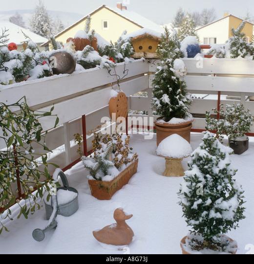 Balcony plants winter stock photos balcony plants winter - Winter flowers for balcony ...