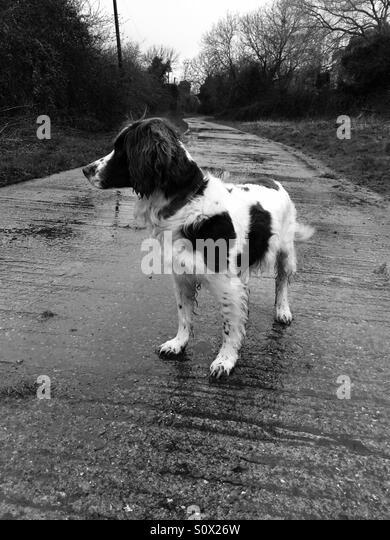 Out on a dog walk - Stock-Bilder