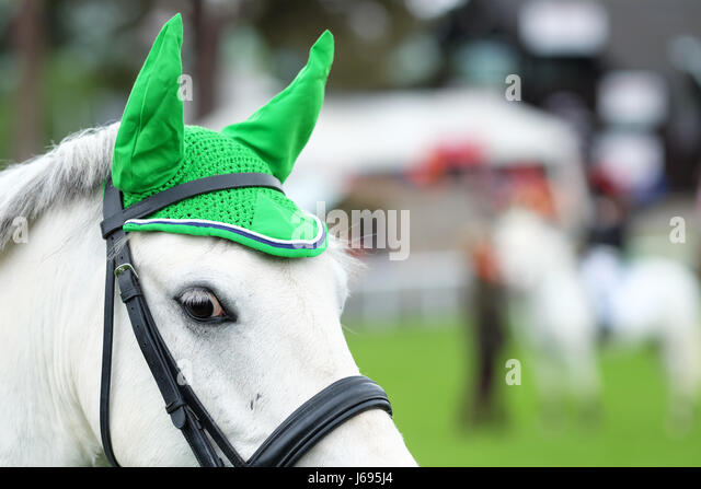 Royal Welsh Spring Festival, Builth Wells, Powys, Wales - May 2017 - A pony with a distinctive green ear hat awaits - Stock Image