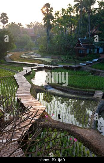 Rice paddies nr Chaing Mai, Thailand - Stock Image
