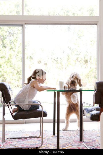 Young girl and dog at modern table with glass of milk - Stock Image