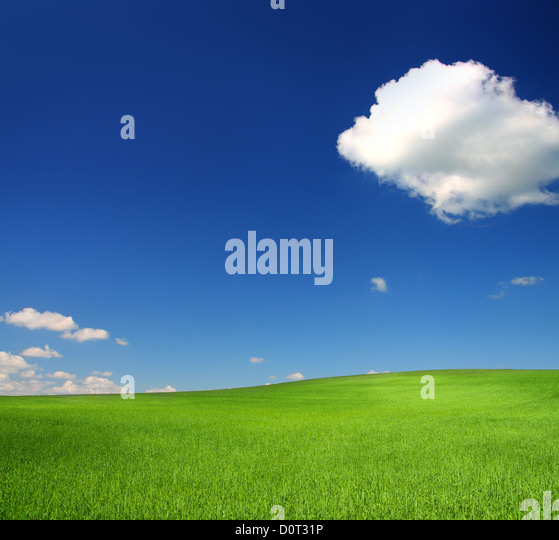 green hill with wheat under blue sky - Stock Image
