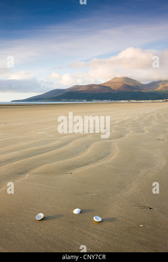 Shells on Dundrum Bay, looking towards the Mountains of Mourne, County Down, Northern Ireland - Stock-Bilder