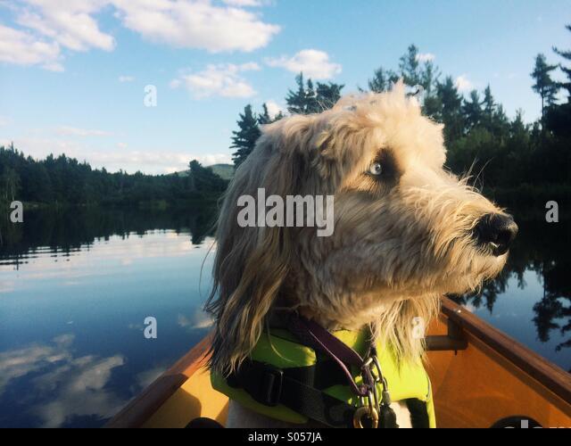 Evening paddle buddy - Stock Image