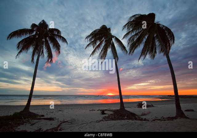 sunset-and-palm-trees-on-playa-guiones-b