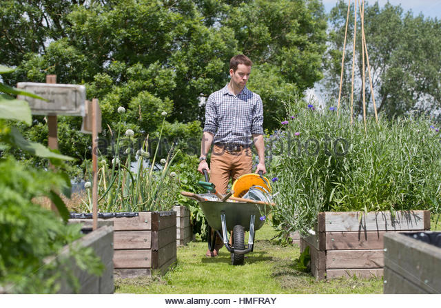 Man with wheelbarrow gardening in sunny summer vegetable garden allotment - Stock-Bilder