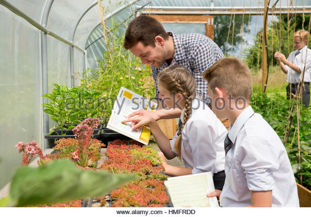 Teacher and middle school students with book learning gardening in sunny plant greenhouse - Stock-Bilder