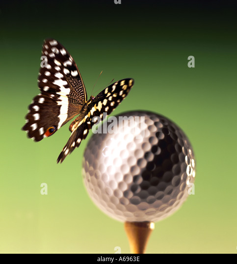 Butterfly on Golf ball - Stock Image