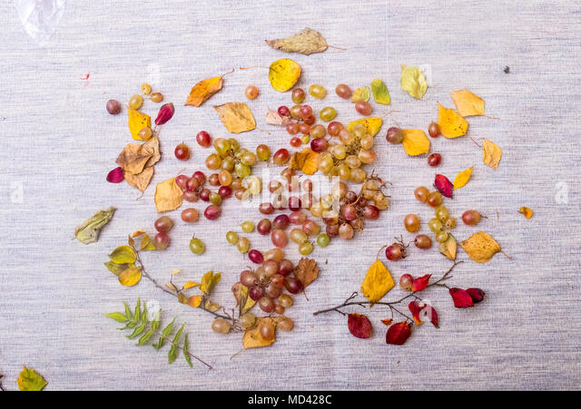 Still life of grapes and autumn leaves - Stock Image