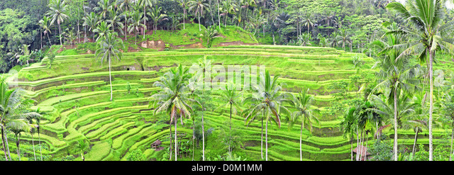 panoramic view of Tegalalang rice field terraces, Bali, Indonesia - Stock Image