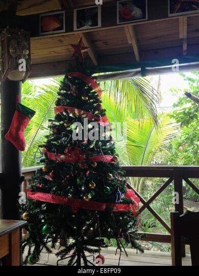 Christmas tree in tropical location - Stock Image