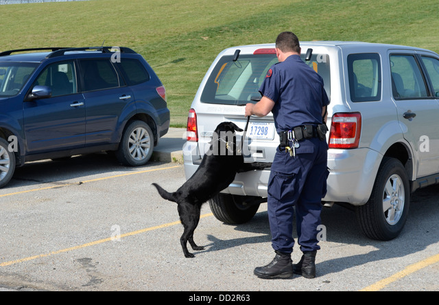 K-9 handler and dog is conducting searches for illegal drugs in an American  maximum security prison parking lot. - Stock Image