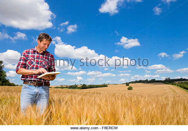 Farmer using digital tablet in sunny rural barley crop field in summer - Stock-Bilder