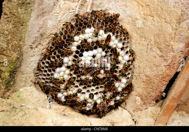 Wasps Nest House Stock Photos Amp Wasps Nest House Stock