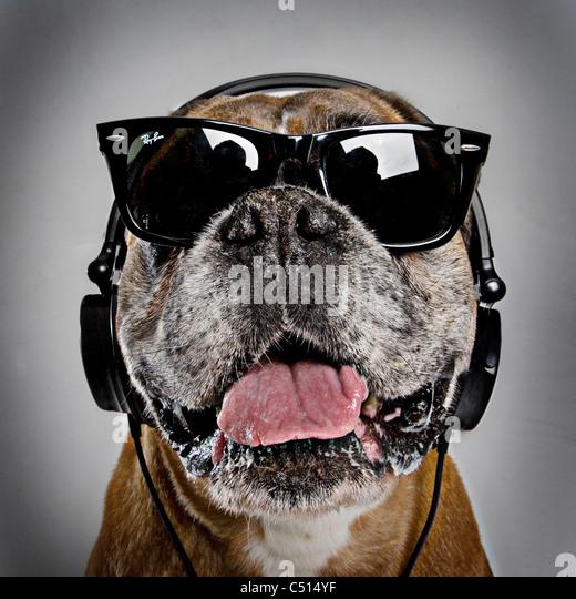 cool boxer dog - Stock-Bilder