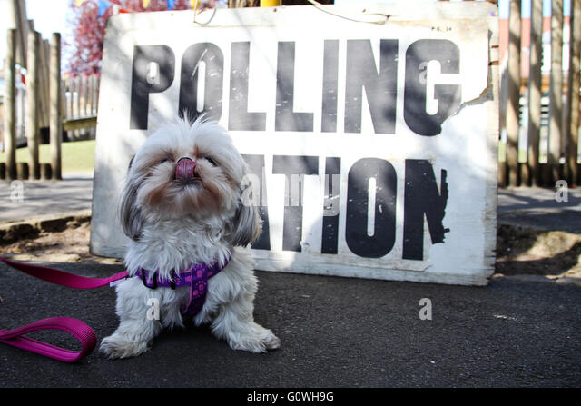 London, UK. 5th May, 2016. Dogs at polling station. Tia visits the polling station at Chestnuts Primary School, - Stock Image
