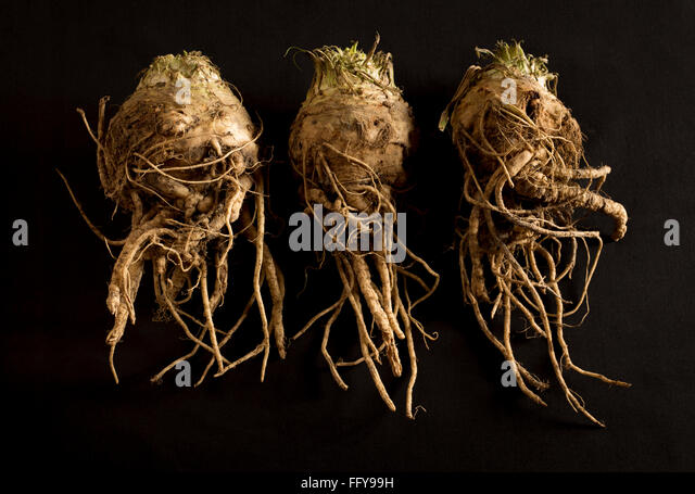 Celeriacs that are wonky, misshape or ugly veg for the reducing food waste movement - Stock Image