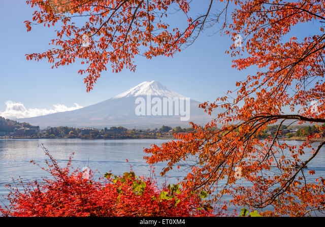 Mt. Fuji, Japan at Lake Kawaguchi during the autumn season. - Stock Image