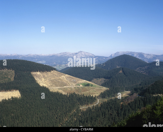 Spain. Basque country. Gorbea or Gorbeia massif. Deforestation. Felling trees. - Stock Image