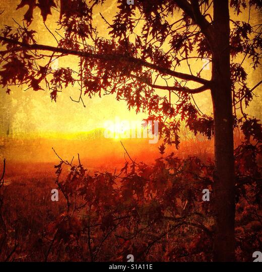 Bright Sunrise Under a Tree - Stock Image